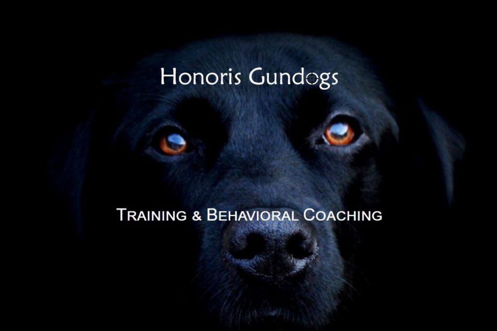 honorisgundogs